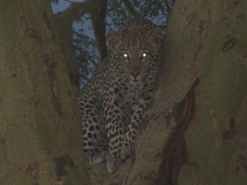 Kenya39.jpg